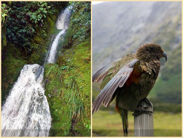 kea bird