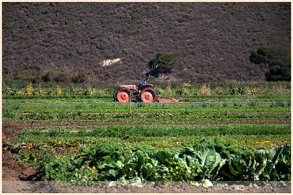 earthbound farm monterey