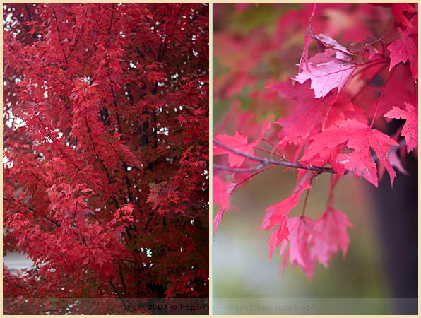 foliage new england leaves
