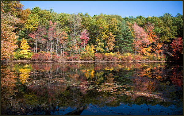 walden pond fall foliage