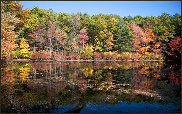 walden pond fall foliage