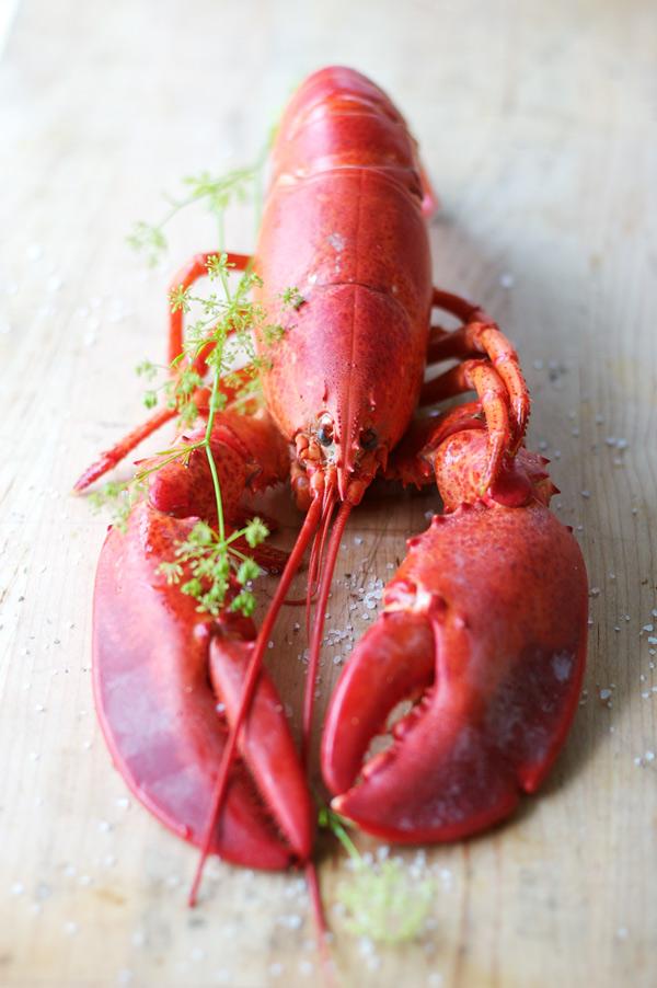 lobster Cohasset