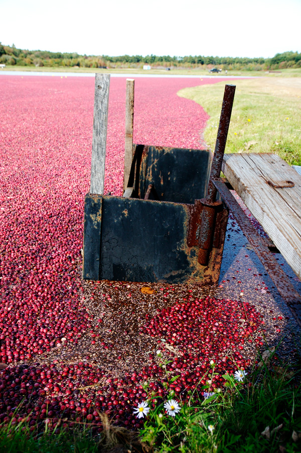 cranberry bog carver