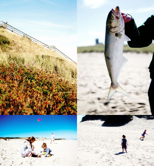 bluefish cape cod Race point beach