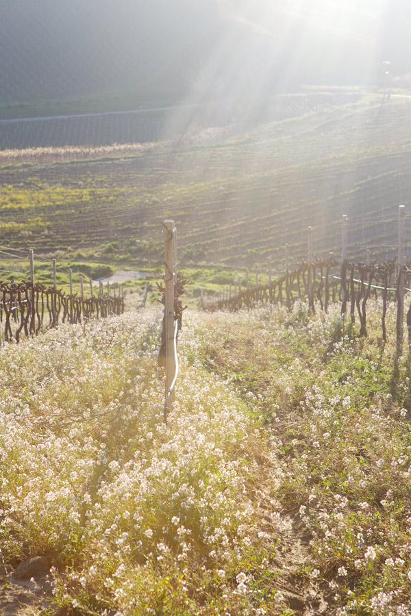sicily Regaleali wine italy