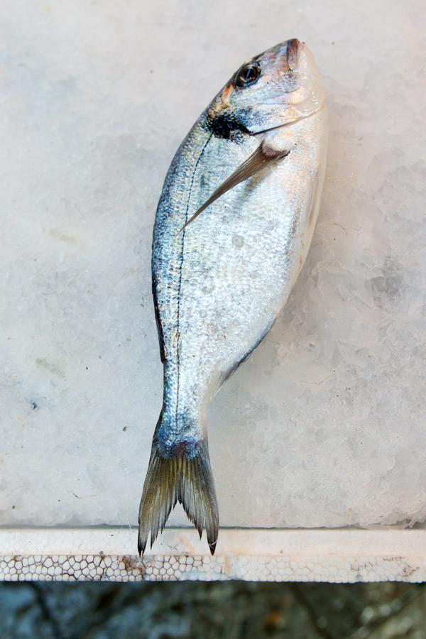 _D0C8526_Fish
