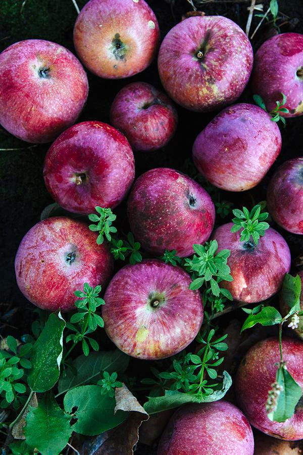 _D0C4717_apples